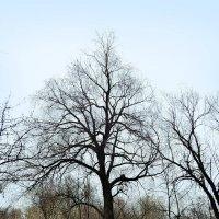 Просто дерево :: Денис Масленников