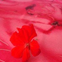 Цветочек герани :: Нина Корешкова