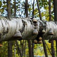 Что за странное копыто крепко к дереву прибито?)) :: Любовь Чунарёва