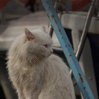 Балаклавский кот :: Александр Пушкарёв