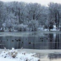 На озере :: Сергей Мышковский