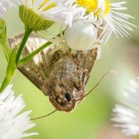 Бабочка и паук :: Оксана Лада