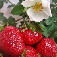 Клубника и цветок шиповника :: Нина Корешкова