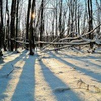 Первая декада декабря.. Наконец-то в России выдали снег за ноябрь..:) :: Андрей Заломленков