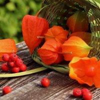 Рыже - красные нотки сентября :: Татьянка *