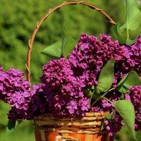 Весна романично-прекрасная! :: Татьянка *