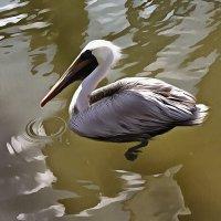 Pelican on the water. Miami 2010. Acrylic. :: Танкист .