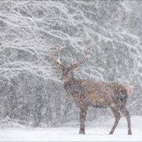Let It Snow .. :: Влад Соколовский