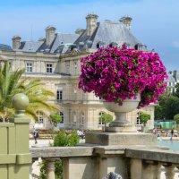 Люксембургский сад :: Наталия