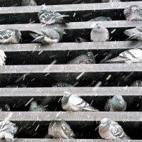 Хостел  для голубей :: олег свирский