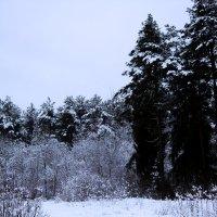 Природа 1 :: Виктория Левина