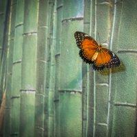 Бабочка на обоях :: Nikolai_ _