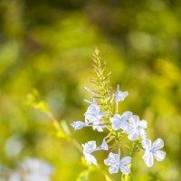 Цветок :: Айк Авагян(haykavagian)