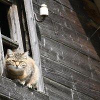 в старом доме :: mirtine