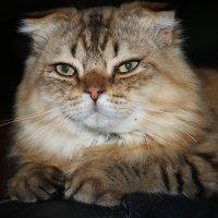 Наш котик Лёва :: Yuljchik