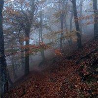 Октябрь в горах..... :: Юрий Цыплятников