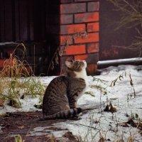 - А где снег? - :: Татьяна Помогалова