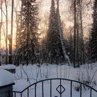 Зимнее утро :: OLLES