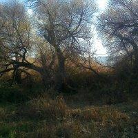 деревья ближе к озеру :: Роман Латышев