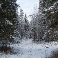 Пришла зима :: sayany0567@bk.ru