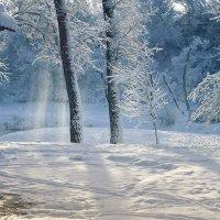 Снежинок хрустальный перезвон... :: Лана Назарова