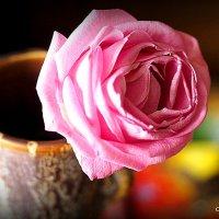 красота одинокой розы :: Олег Лукьянов