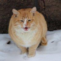 Рыжий кот :: венера чуйкова