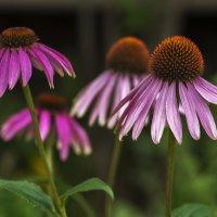 Цветы сентября :: gribushko грибушко Николай