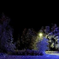 Разноцветная зима. :: Елена Михайлова .