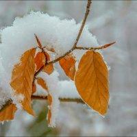Первый снег... :: Юрий Гординский