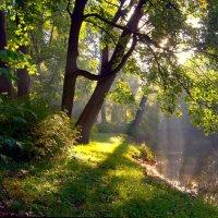 Солнечное утро :: Наталья