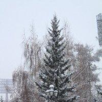 Снежным днём в Иркутске :: Roman PETROV