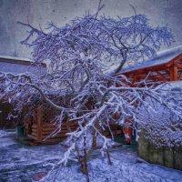 Зима 1 :: Алексей Цветков