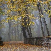В старом парке.... :: Юрий Цыплятников