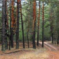Лесные тропы. :: Валентина ツ ღ✿ღ