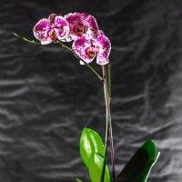 Вино с ароматом орхидей :: Владимир Деньгуб