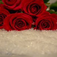 опять роза... :: navalon M