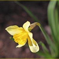 Поклон весне :: Лидия (naum.lidiya)