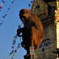 Непал. Храмы Патана :: Gal` ka