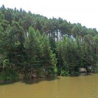 Берег реки :: Вера Щукина