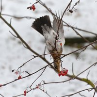 эквилибрист :: linnud