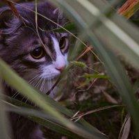 В траве сидел котенок :: ...Настя ...