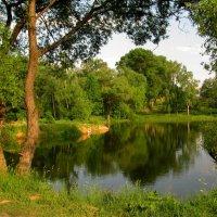 Летом на пруду. :: Oleg S