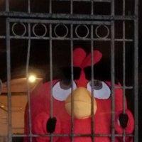 свободу попугаям :: андрей иванов