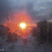 Солнечный свет :: OLLES