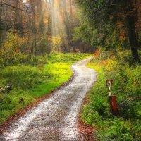 Свежестью разум дурманит Осенью сказочный лес. И за собой в чащу манит, Полную разных чудес. :: Юрий. Шмаков