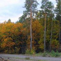 Осенний пейзаж. :: Валентина ツ ღ✿ღ