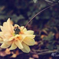 Flower :: Timetofoto