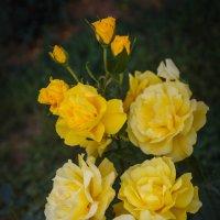«…Его дыханье на мгновенье задержалось, На желтых розах дивной красоты….» :: Андрей Нибылица