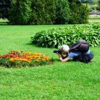 Вот тот цветочек, самый ,самый.. ))) :: Alexey YakovLev
